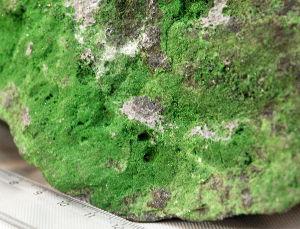 Образец, щетка кристаллов, зеленый гранат (уваровит)
